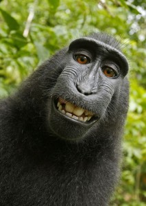 Who Owns This Picture? The Macaque? The Photograper That Set Up the Camera? Who Knows!